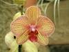 orchideje-28