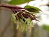 kvet-bambusu