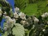 kvety-kiwi
