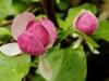 magnolie-zahrada-hukvaldy.jpg