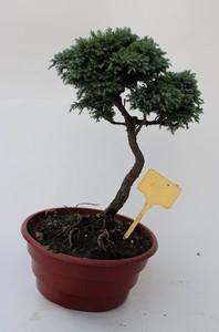bonsa5